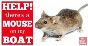 Sometimes we get a VERY undesirable stowaway: a mouse or a rat. How do you get rid of it? What's best? What shouldn't you do? And what do you have to watch out for?