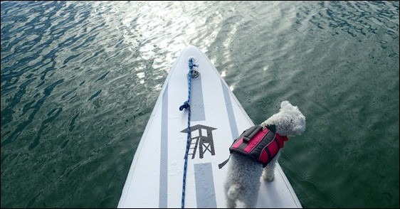 Food for a Boat Dog: I am not an expert on dog food. But I can tell you what we're using and why we like it.