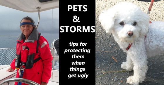 As you're planning for the safety of your boat and yourself, don't forget the furry crew members! A few tips for them, too . . .