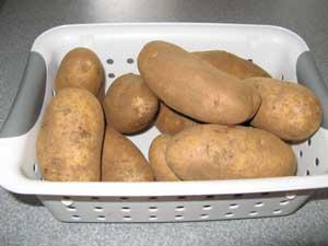 Potatoes in a Sterilite bin