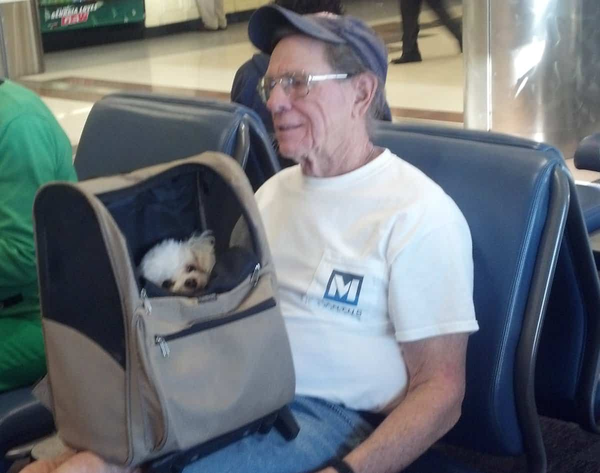 Dog in carry bag in airport