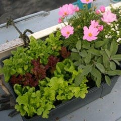 A garden on the back deck of a boat